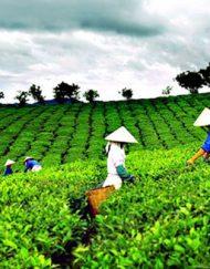 Nguyên liệu Việt Nam sạch, an toàn